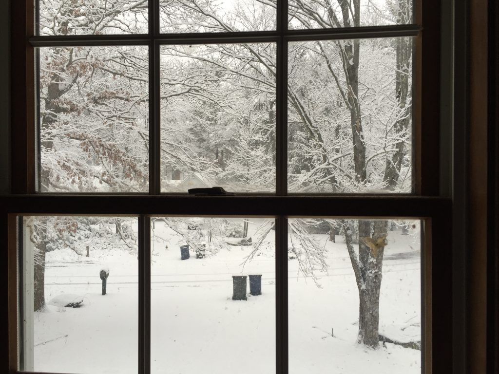 Out my office window this week. photo by Corrina Lawson.
